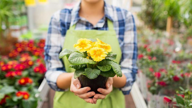 Nainen töissä kukkakaupassa (1)