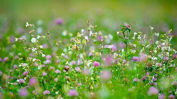 kukkaketo