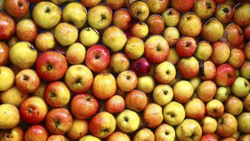 omena omenat siideri hedelmät