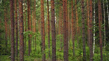 Retkellä metsässä (1)