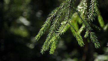 Retkellä metsässä (2)