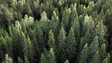 Retkellä metsässä (3)