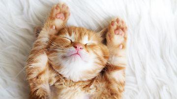 kissa sängyllä