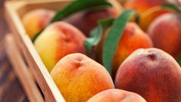 persikka