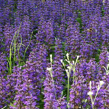 kukkia (1)