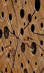 Koloja puussa – vai kaameita onkaloita? Copyright: Shutterstock.