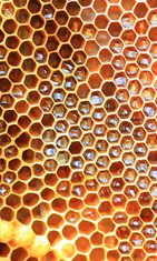 Hunajakenno – vai loputon määrä kaameita koloja? Copyright: Shutterstock.
