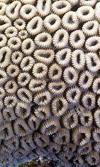 Koralli – vai kamalia onkaloita? Copyright: Shutterstock.