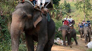 norsusafari