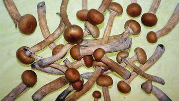 taikasieni, magic mushroom, psilosybiini, sieni