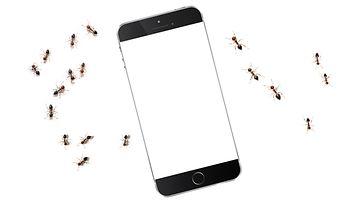 puhelin ja muurahaisia