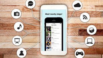 koira-app