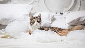 Kissat auttavat mielellään petaaman pedin... omalla tavallaan.
