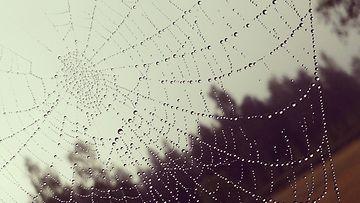 Hämähäkinverkko. Kuva: Tuuli Iltanen