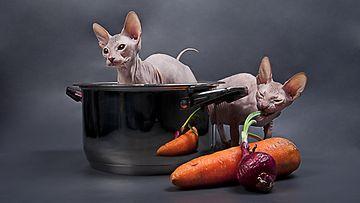 Kissat kattilassa
