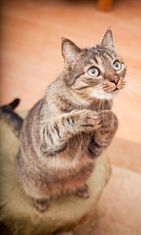 kissa rukoilee