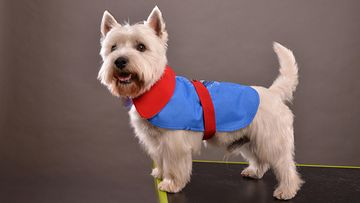 Koira takissa (2)