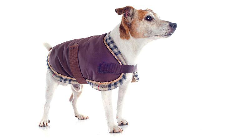 Koira takissa (5)