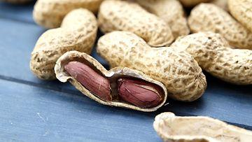 maapähkinä