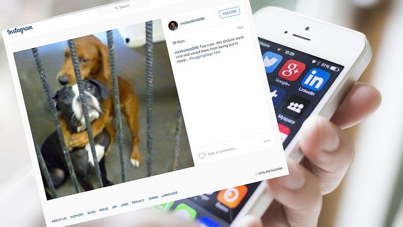 Koirien hali levisi myös Instagramissa.