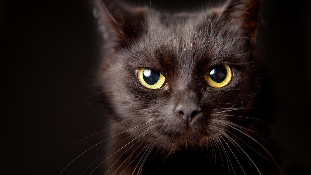 Animal Crossing Halloween Cat
