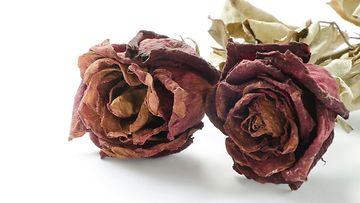 kuolleet ruusut
