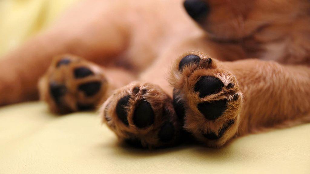 Koiran Tassut