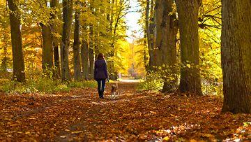 Syksyllä metsässä