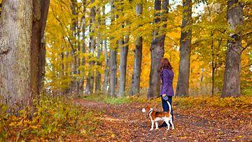 Syksyllä metsässä (1)