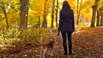 Syksyllä metsässä (2)