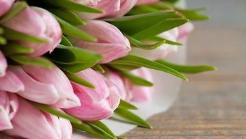 kukkakimppu, tulppaanit
