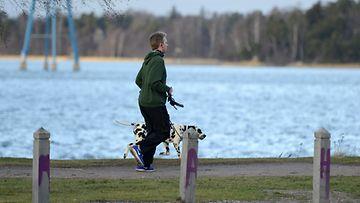 Mies ulkoilutti koiraa lauhassa säässä Hietaniemessä Helsingissä 30. joulukuuta 2013.