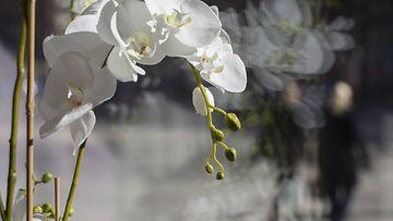 suru, hautaustoimisto, kukka