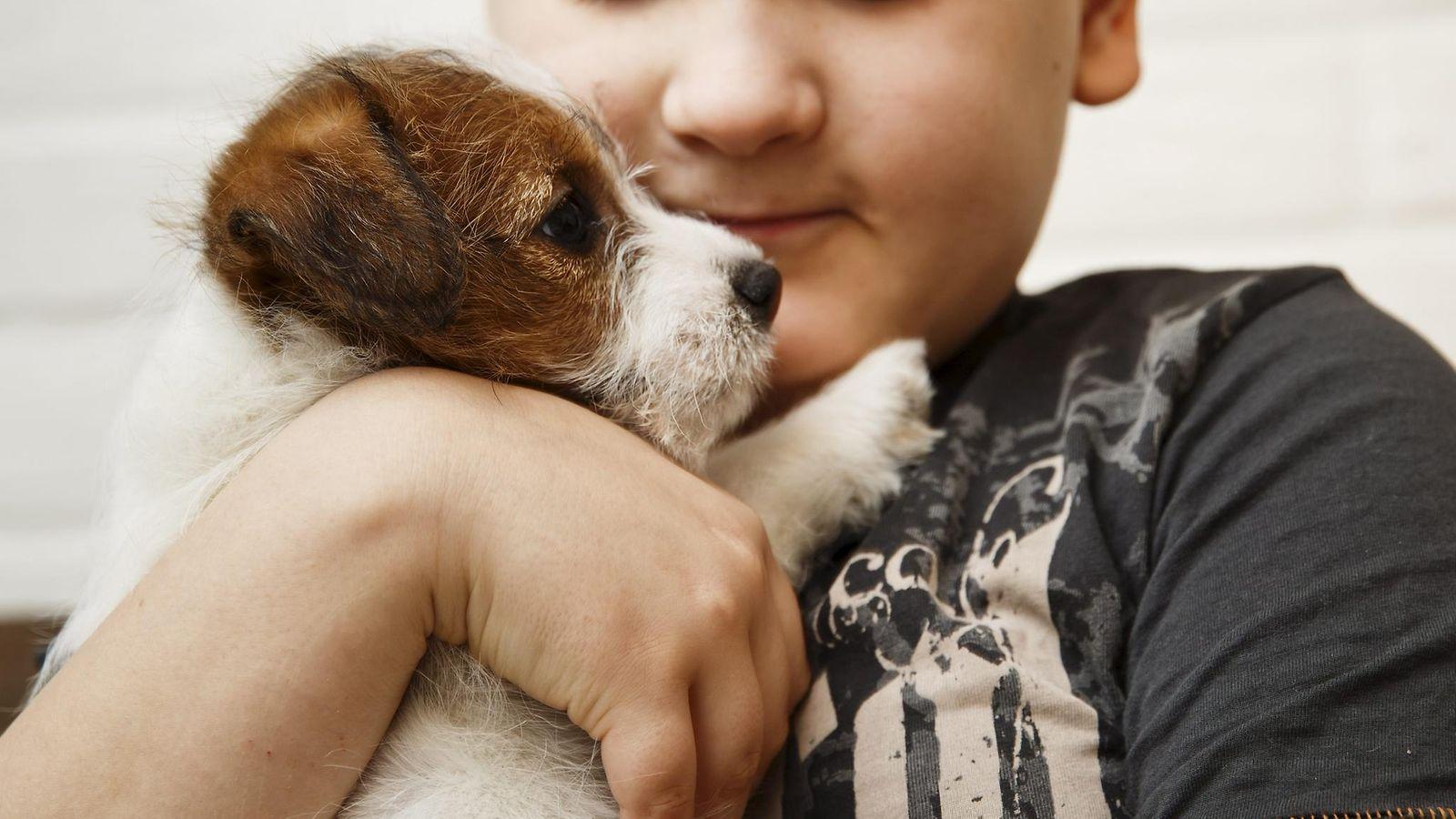 Hyviä uutisia eläinten ystäville – lapsen riski sairastua astmaan pienenee koiraperheessä ...