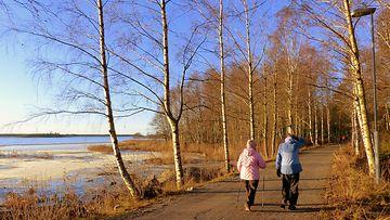 Lumeton maa Vaasassa 26. marraskuuta 2015. Kuva: Matti Hietala
