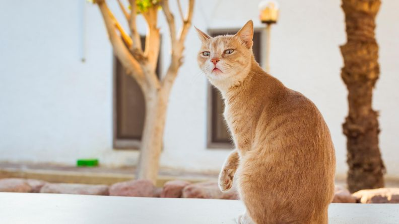 Kissa (1)