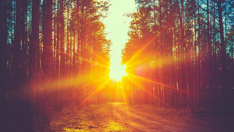 auringonnousu, metsä