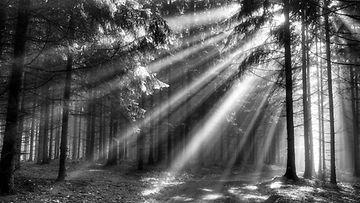 Aurinkoa metsässä