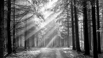 Aurinkoa metsässä (1)