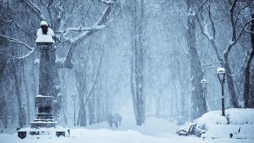 talvi, puisto, puut