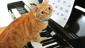 kissa_piano