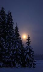 kuu_metsä