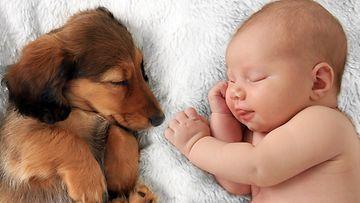 koira ja vauva