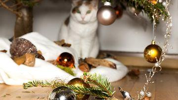 kissa ja joulu