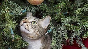 kissa ja joulu (1)