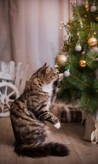 kissa ja joulu (2)