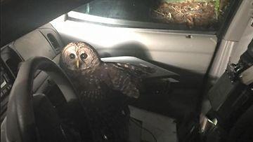 Pöllö poliisiautossa. Kuva: Covington Police Department/Facebook