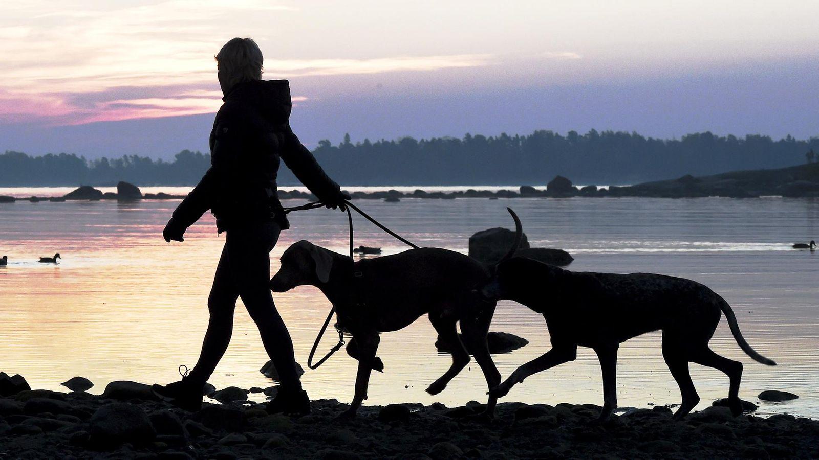 Tässä ovat Suomen suosituimmat koirarodut – halutuin ei välttämättä ole kallein - MTVuutiset.fi