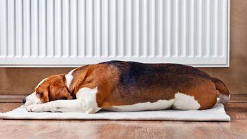 Koiran Vakuutus Lähitapiola