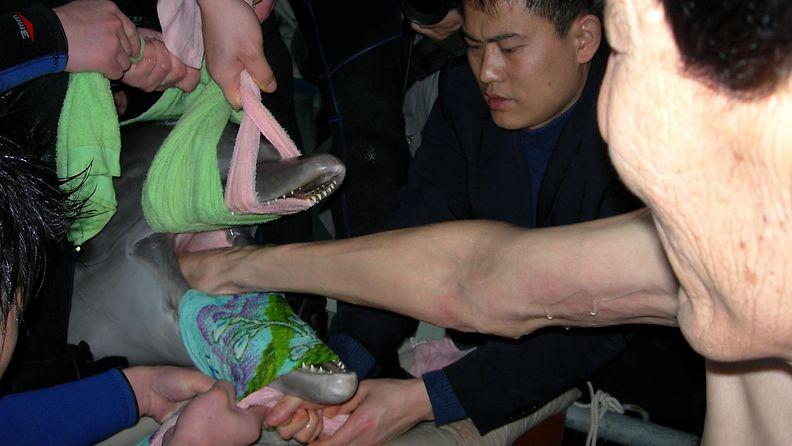 Bao Xishun pelastaa delfiinin